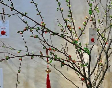 Độc đáo hoa đào Nhật chơi Tết, giá chục triệu đồng